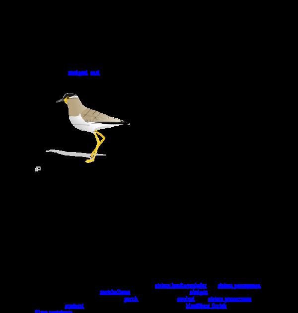 Burung Gambar Kerangka Hewan Vertebrata Doc Materi Kuliah F Pertanian Uniska Academia Edu Apa Itu Burung Sebenarnya Kliknclean Hewan Vert Burung Hewan Gambar