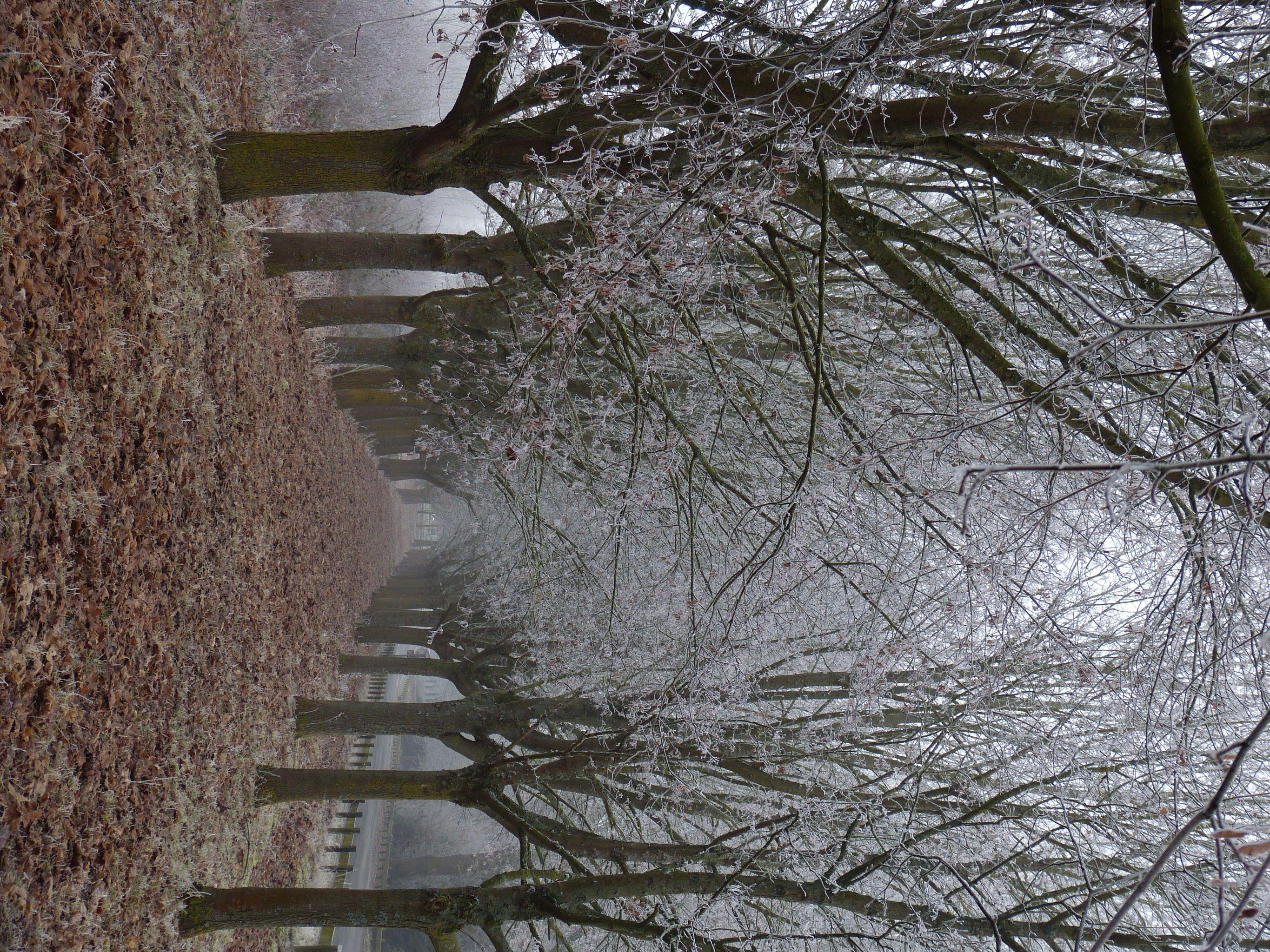 Avenue des arbres givrés - null