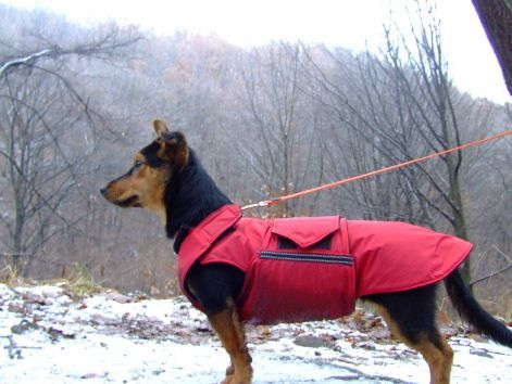 Dog Jacket, Dog Coat, Custom Dog Raincoat, Waterproof / Fleece, Custom made