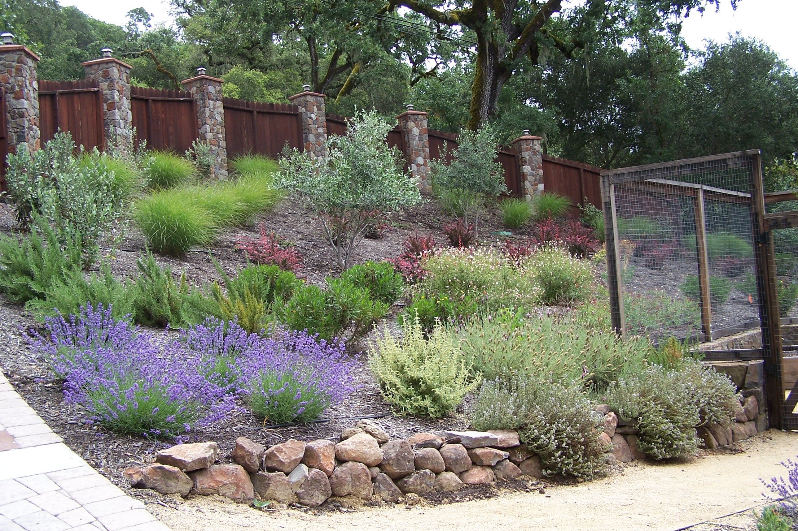 dry hillside garden with deer visitors in sonoma county kim