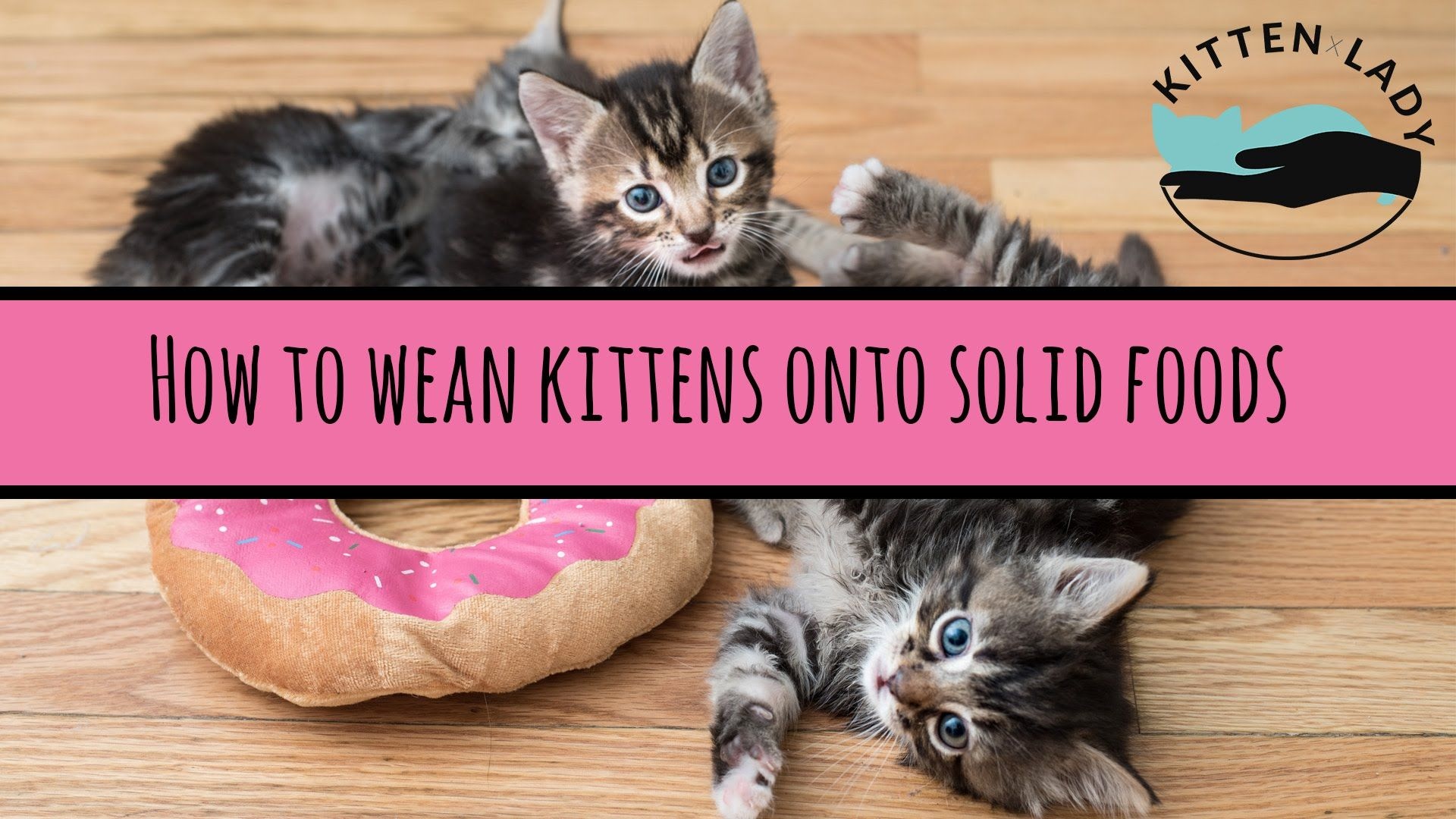 How To Wean Kittens Feeding Kittens Baby Kittens Kitten Care