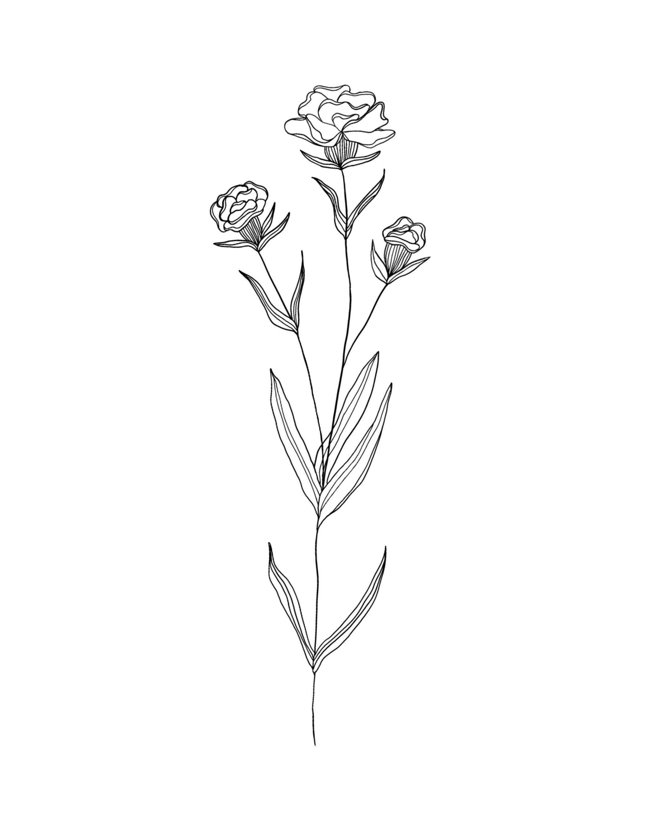 Birth Month Flowers   Carnation   January