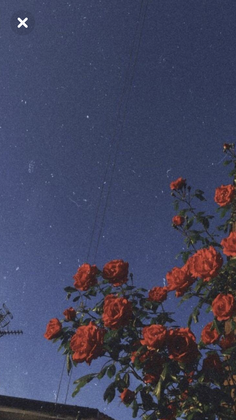 Pin von Eiten Yousuf auf Ästhetik Sonnenblumen tapete