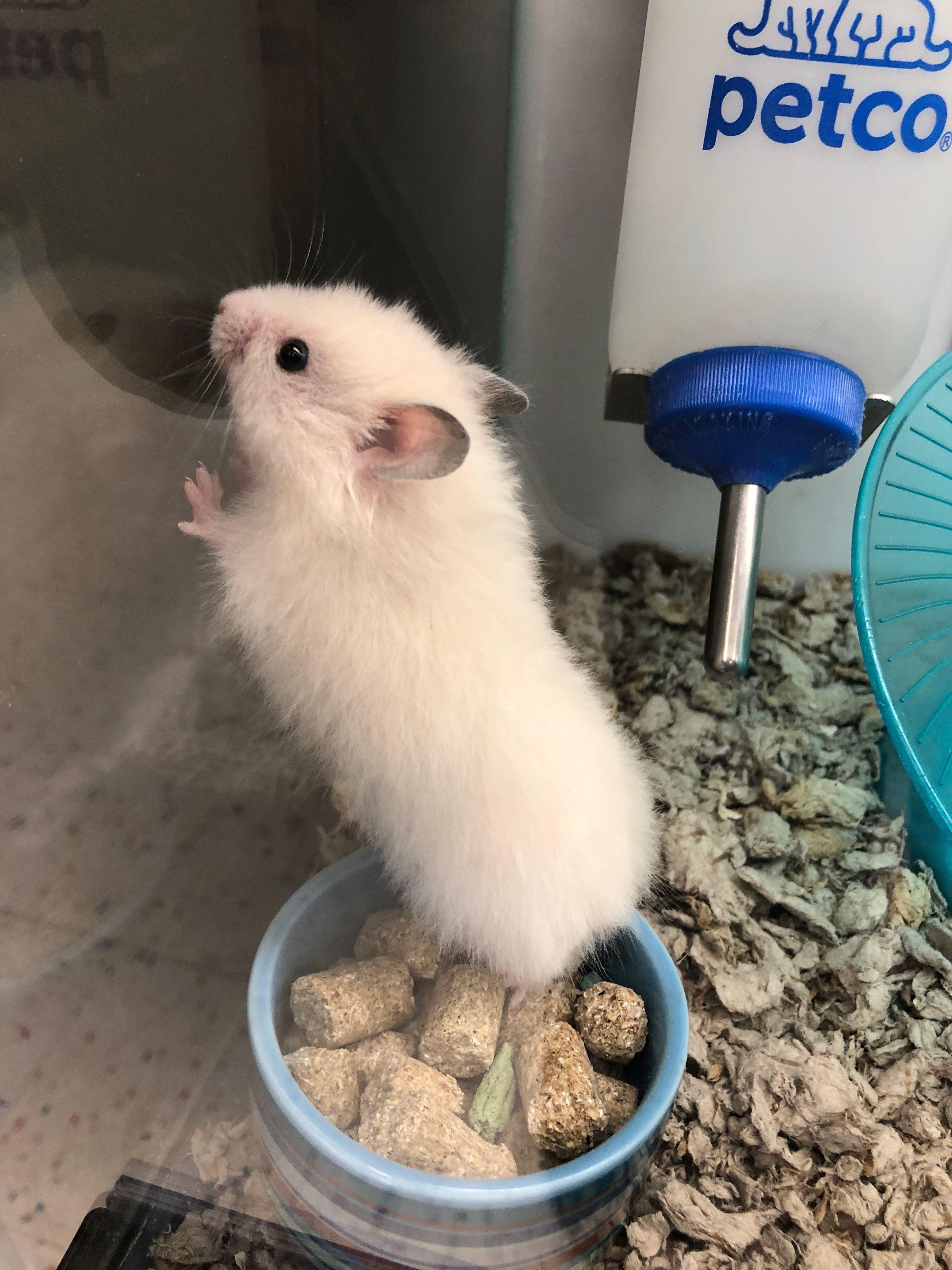 So Cute Cute Animals Hamster Hamster Life