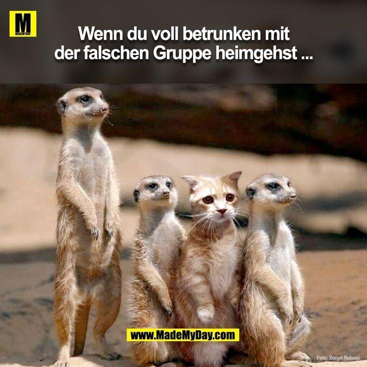 Pin Von Petra Bernhardt Auf Lustig Mit Bildern Katzen Lustige