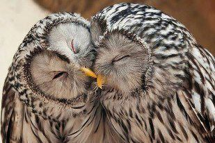I love owls, and these two love each other. <3
