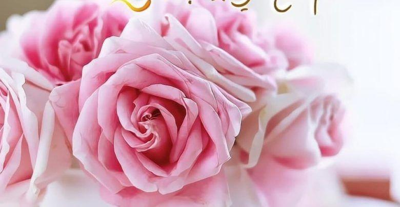 أدعية الصباح تويتر من الأوراد الصباحية Rose Flowers Plants