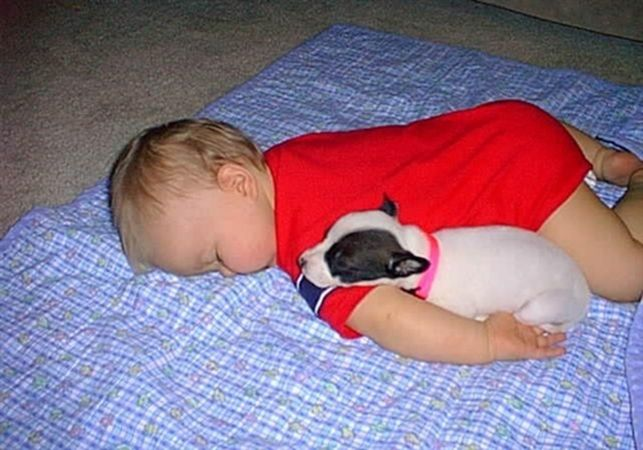 Dogs And Babies Sleeping | Felicity Huffman's What The Flicka? #pets #kids #cute #pics #gallery #adorable #baby #sleep #puppy #puppies #dog