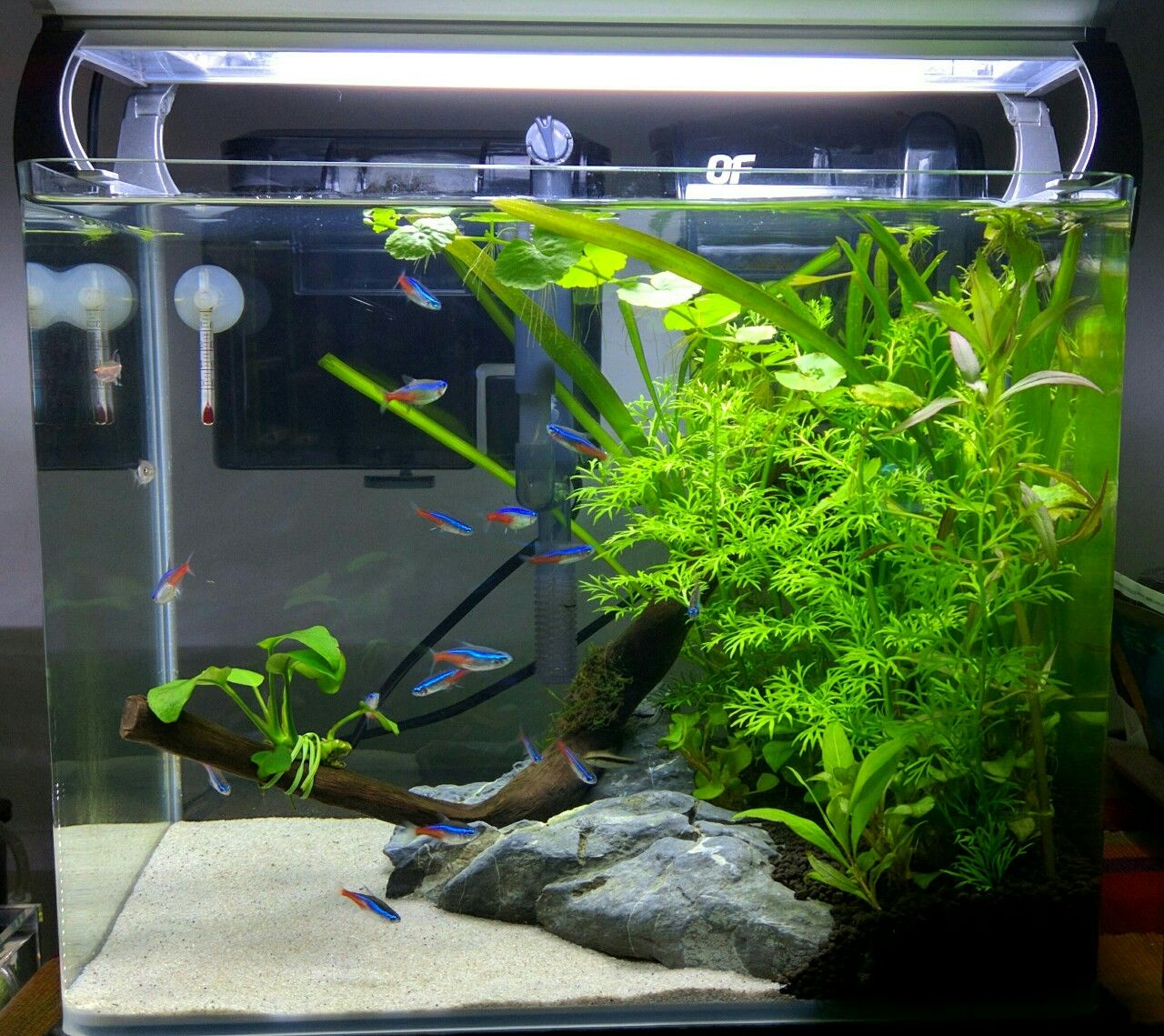 Home Aquarium Design Ideas: Betta Fish Facts