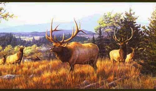 Elk Mountain Wallpaper Border Outdoors With Hautman Brothers By
