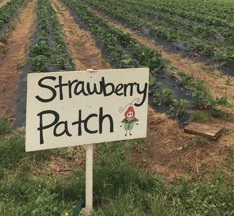𝘧𝘪𝘯𝘥 𝘮𝘦 𝘩𝘶𝘯𝘯𝘪𝘦𝘣𝘶𝘮 ! ♥︎ Aesthetic, Strawberry patch