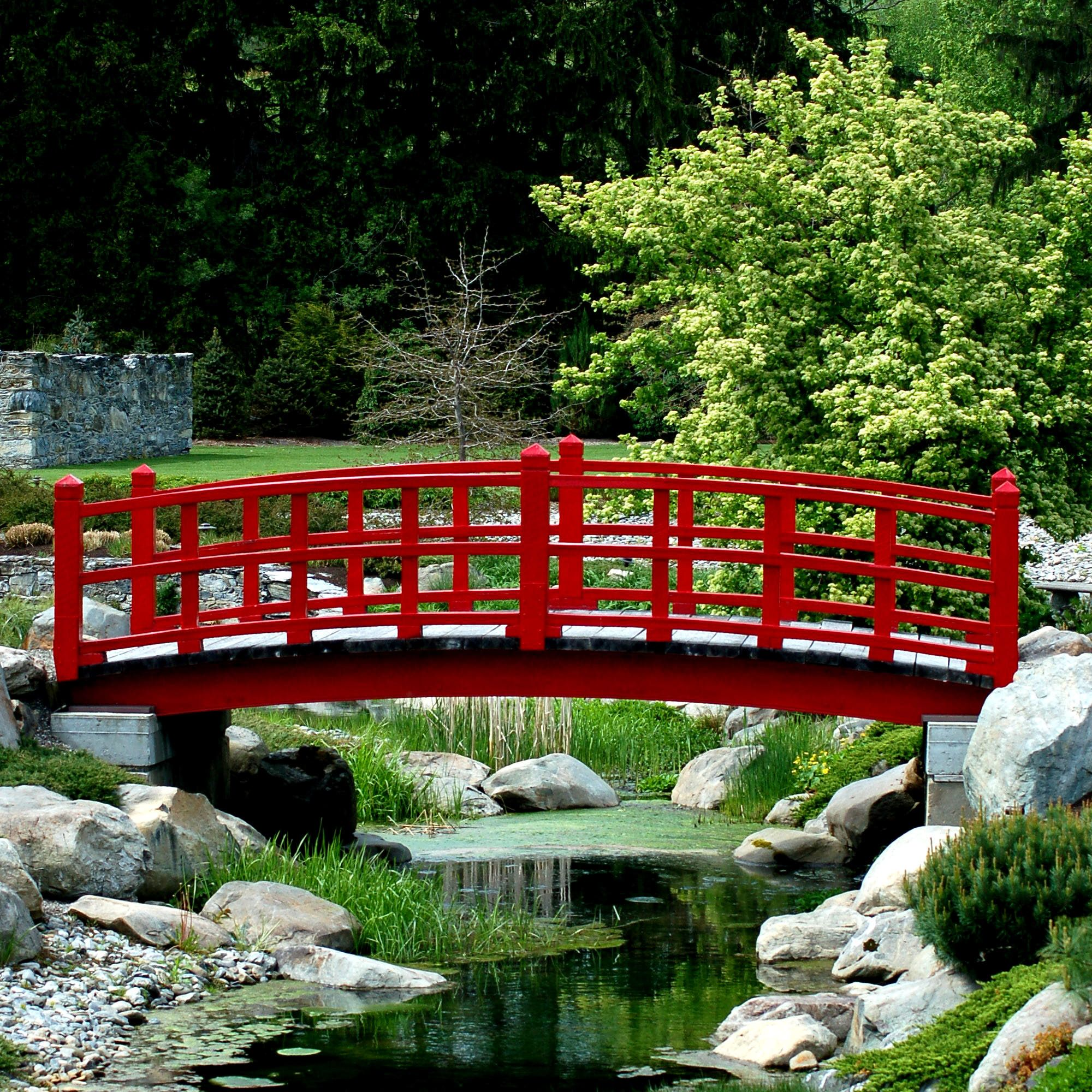 Looking for plants for a japanese garden learn more about for Japanese garden pond bridge