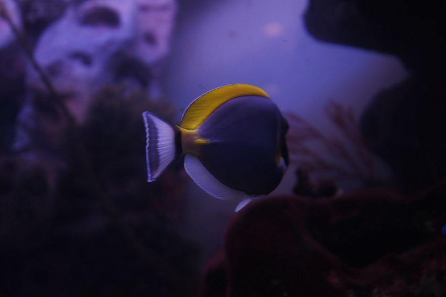 Underwater World  by Kseniya Fedorowa on 500px
