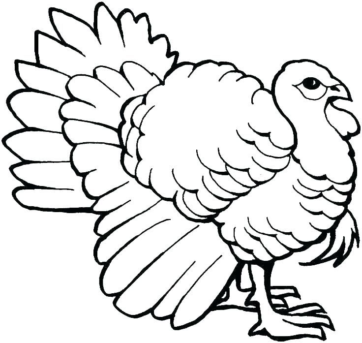 Turkey Coloring Pages Ideas For Thanksgiving Celebration ...