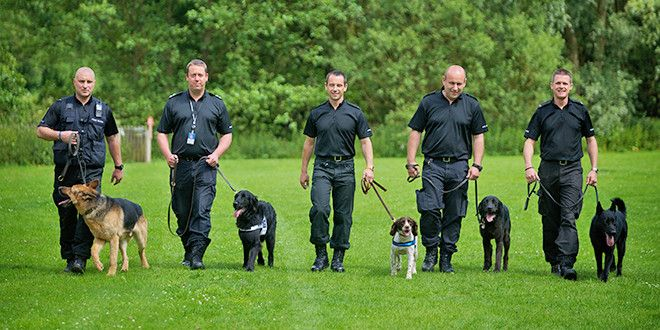Police Dog Training Tricks You Can Use With Images Police Dog