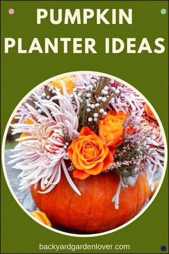 Check Out These Adorable Pumpkin Planter Ideas Perfect For Fall Decorations, For…