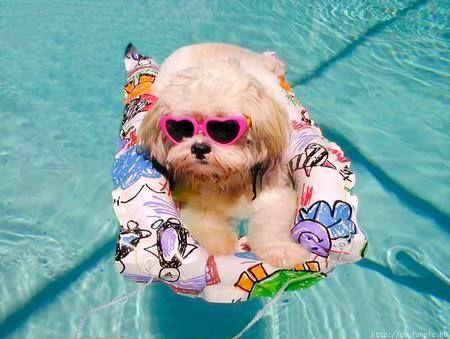 Awwwww Cute Animals Cute Dogs Shih Tzu