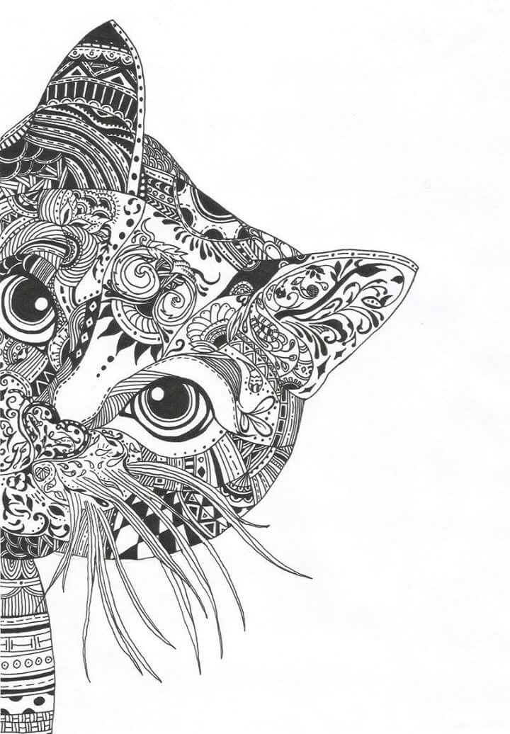 #catsdiydrawing | Mandala drawing, Cat coloring page, Mandala