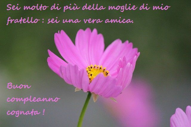 Buon Compleanno Cognata! | Compleanno | Flower images, Cosmos