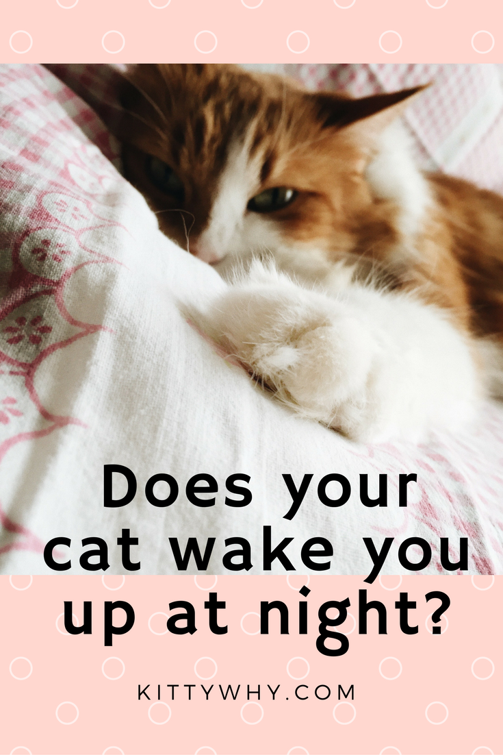 What To Do If Your Cat Wakes You Up At Night Cats Cat Behavior Furry Friend