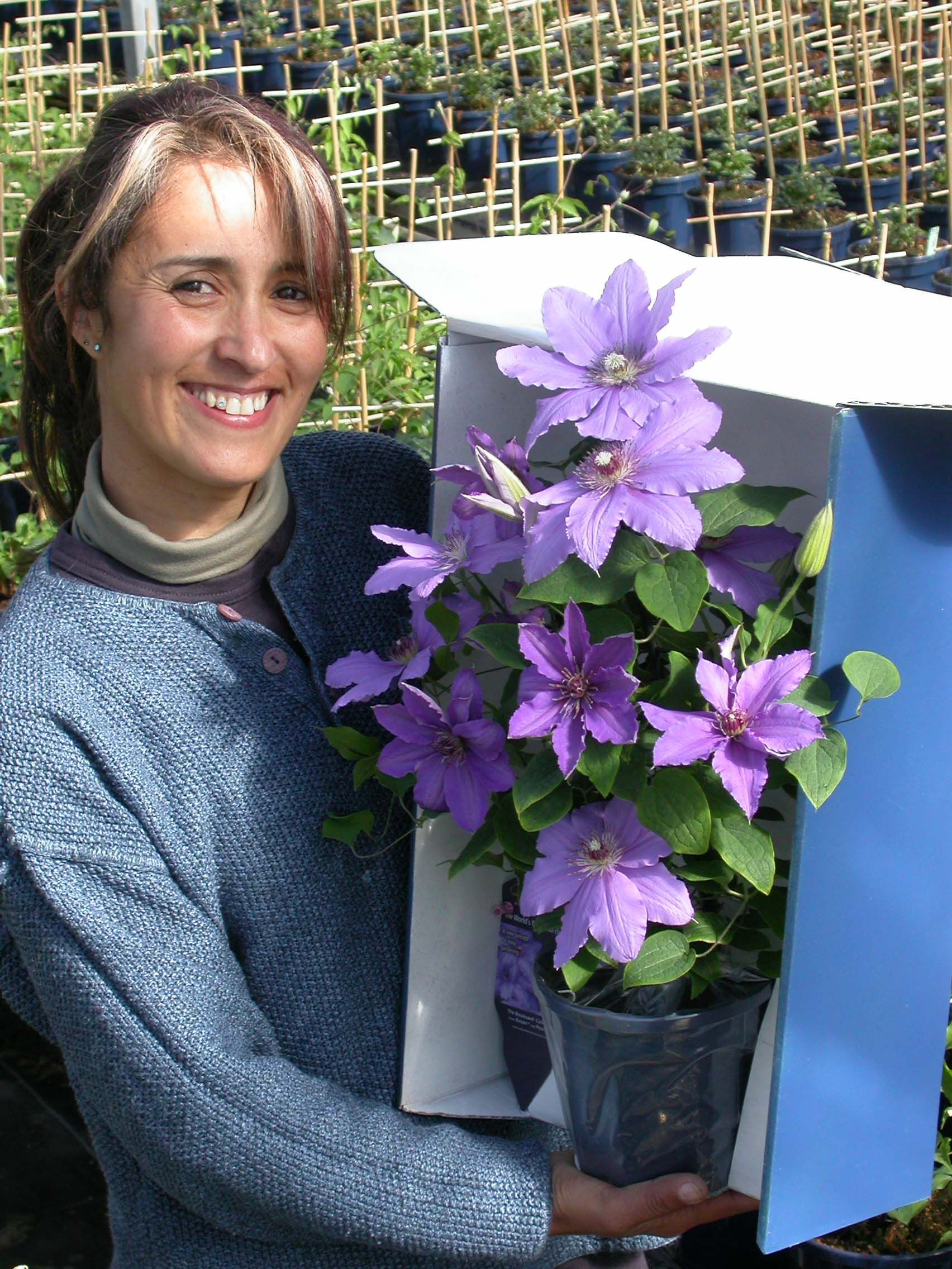 Raymond Evison Clematis Shipping All Over The World Watch You