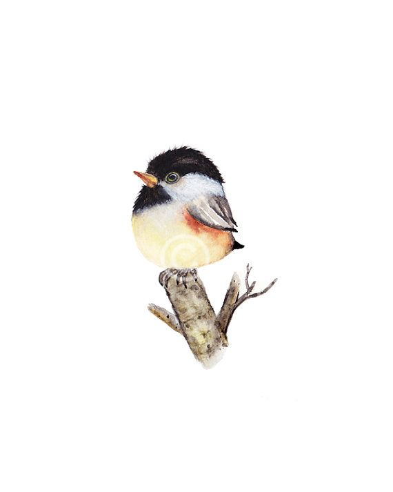 Bird Watercolor Watercolor Birds Baby Bird Bird By Fluffibee