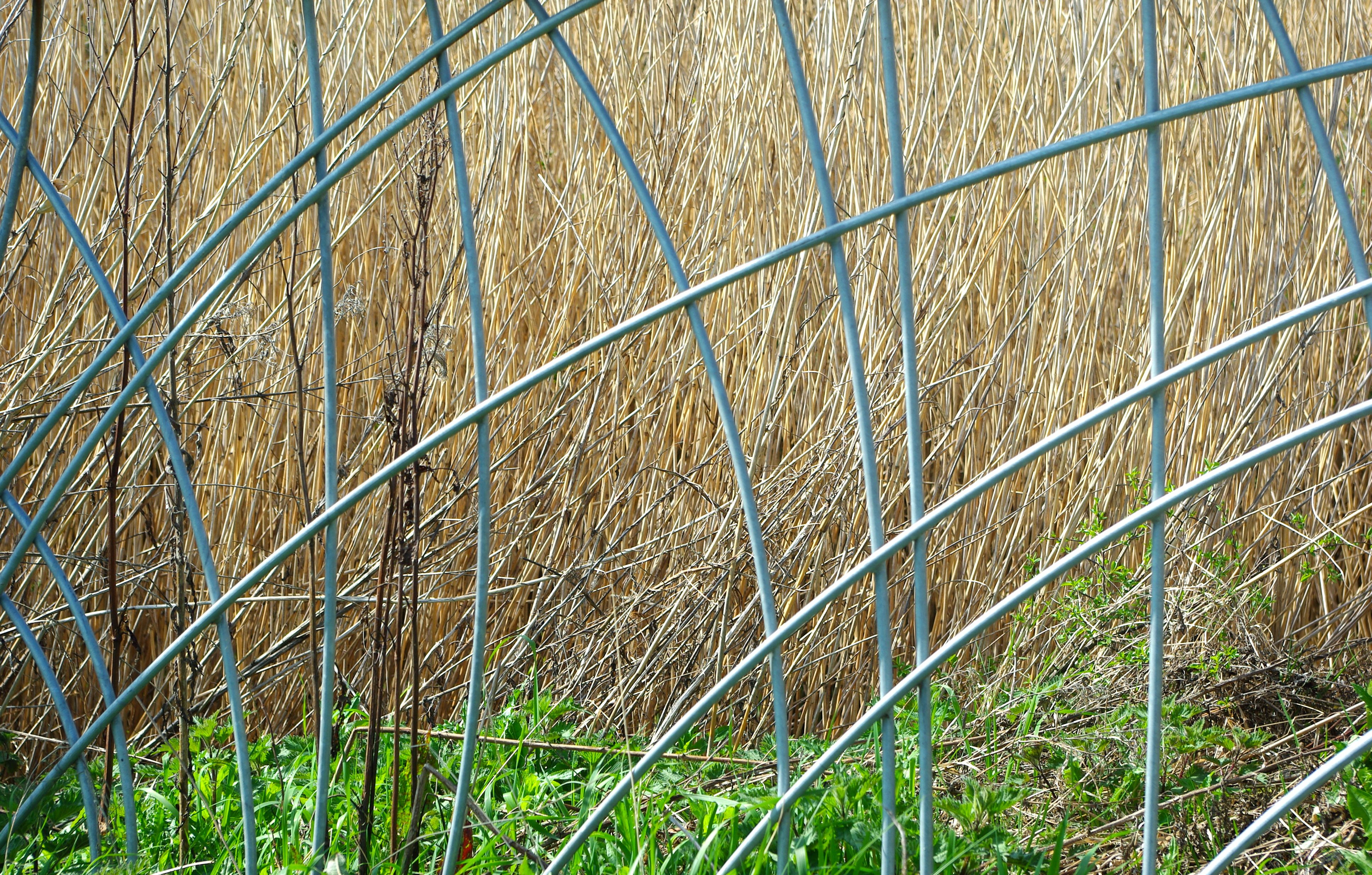 Steel 'reed' pattern fence panel with reeds behind.  Design : Kevin Barton