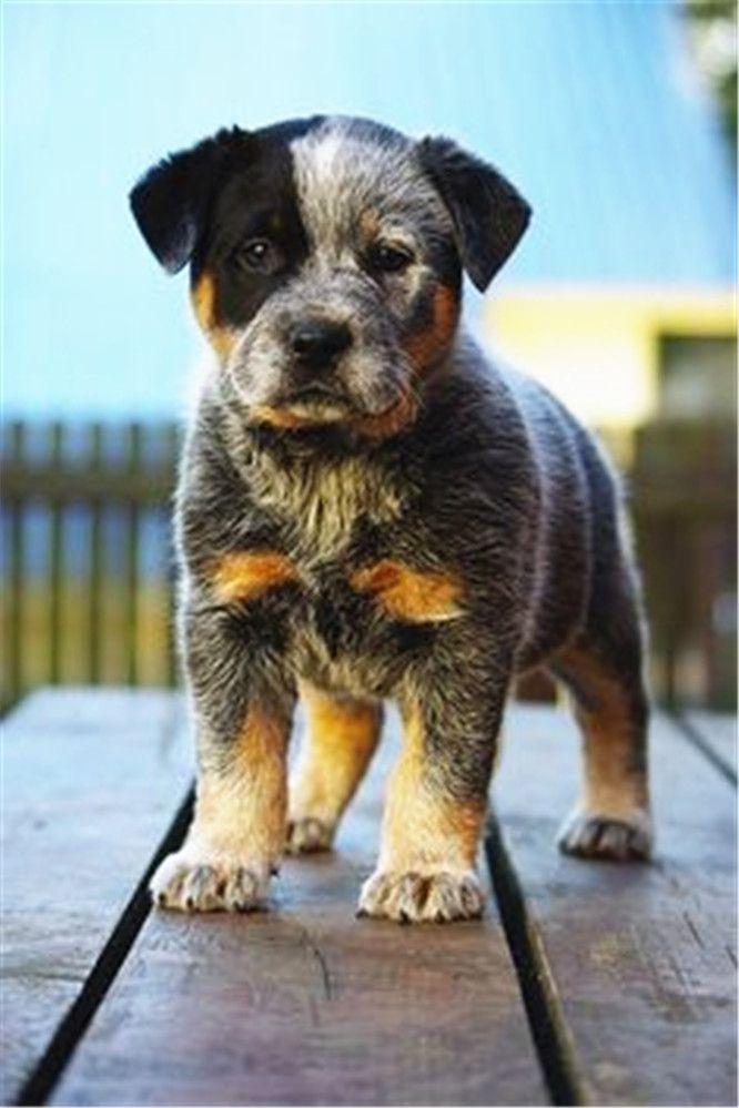 Visit the post for more. Beagles Pinterest Medium