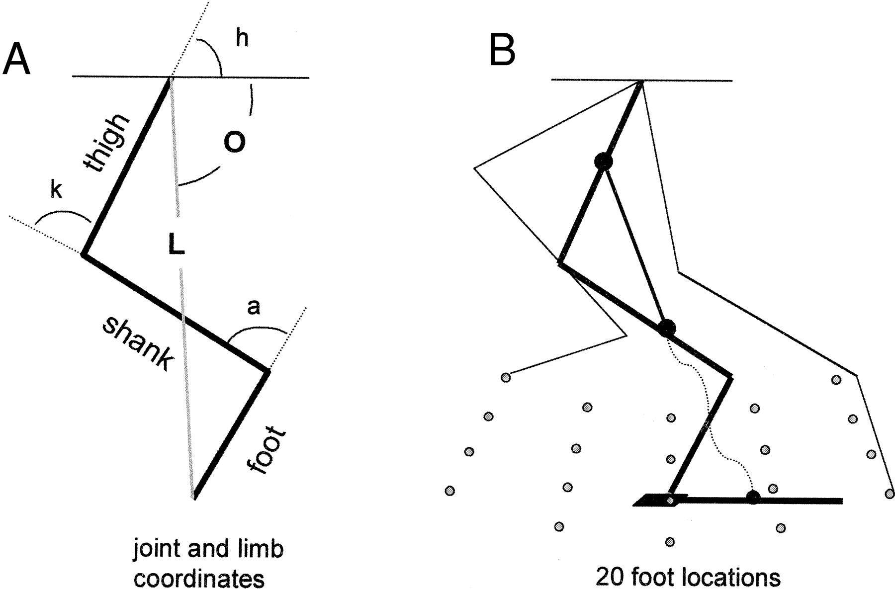 Stick Figure Limb Angles