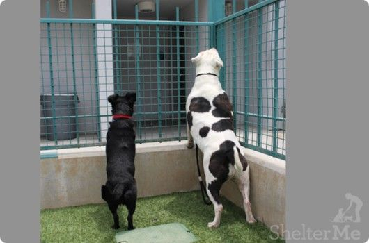 Help Ebony and Sampson stay together and find a new home.