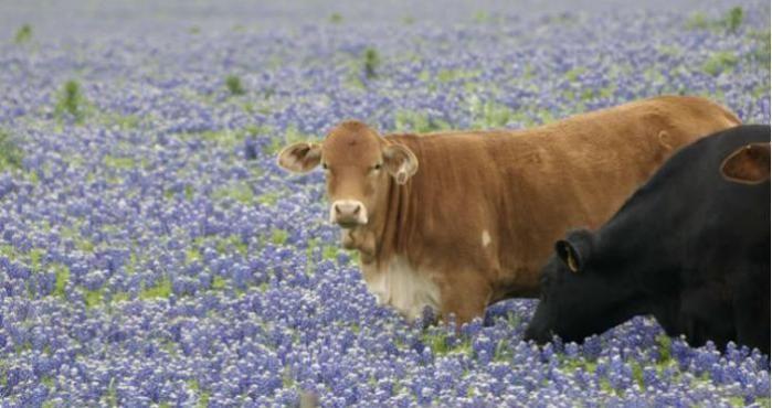 Los colores de los caminos de Texas durante la primavera.