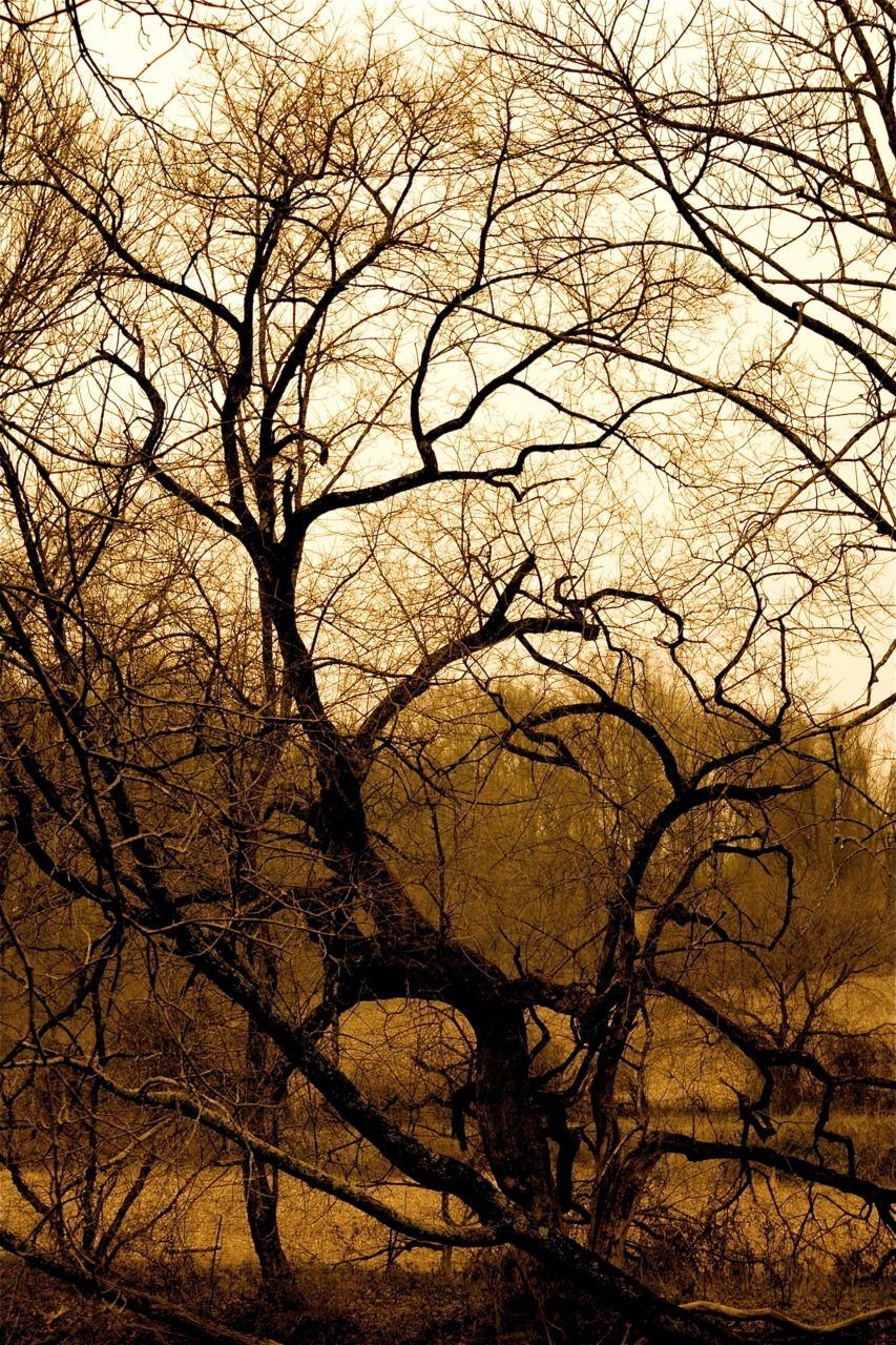 Love The Sepia Tone Nature Prints Beautiful Tree Tree Art