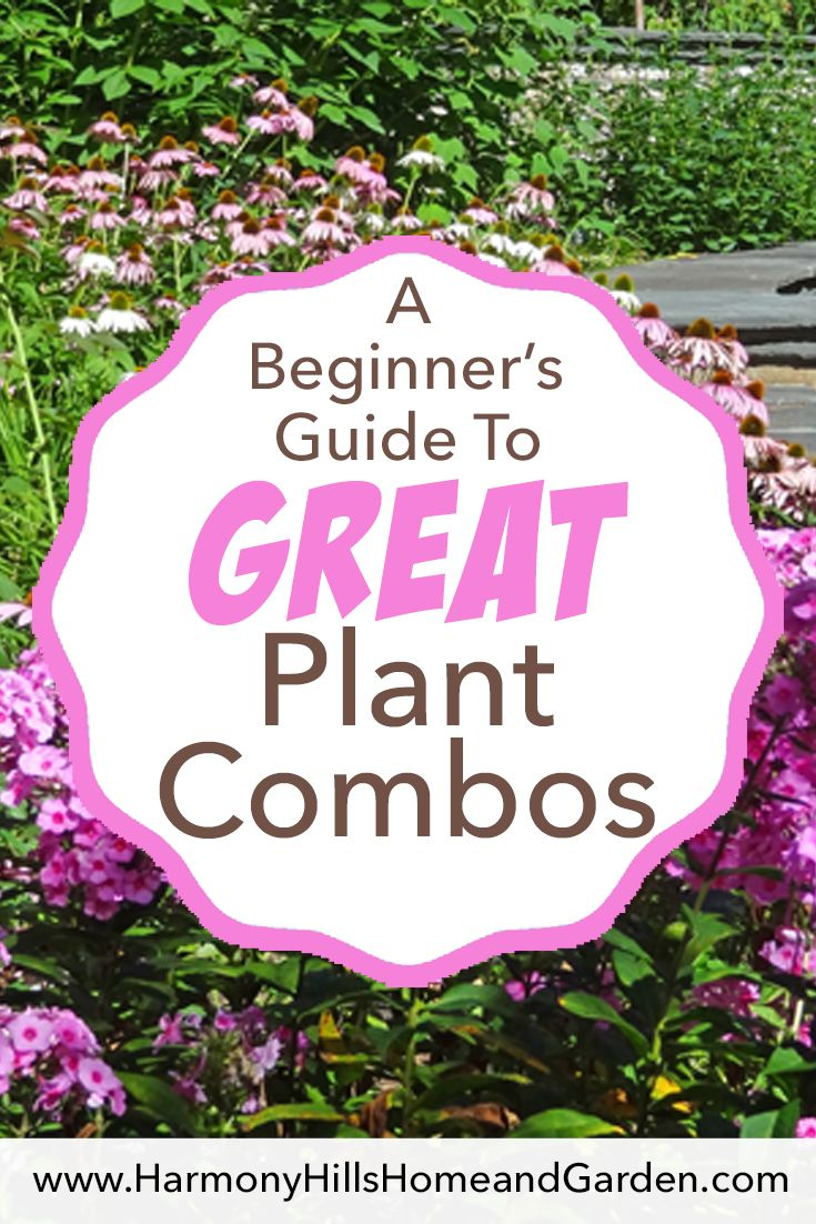 A Beginner S Guide To Great Plant Combinations What Flowers To