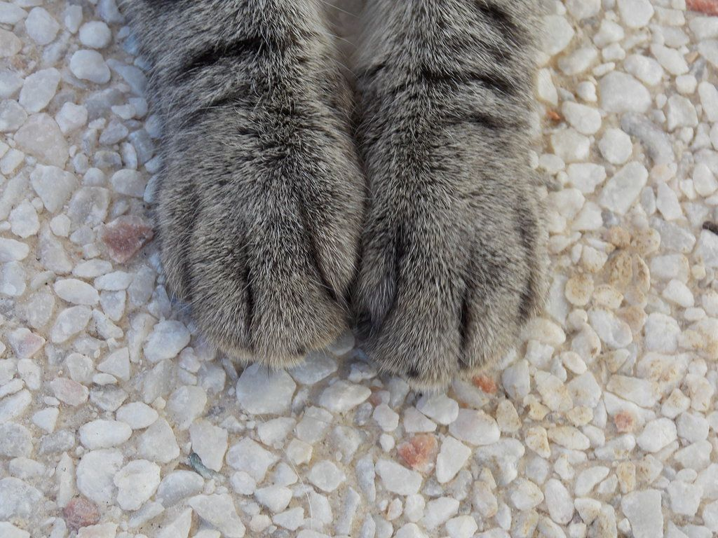 cat paws by Millenium2908.deviantart.com on @deviantART