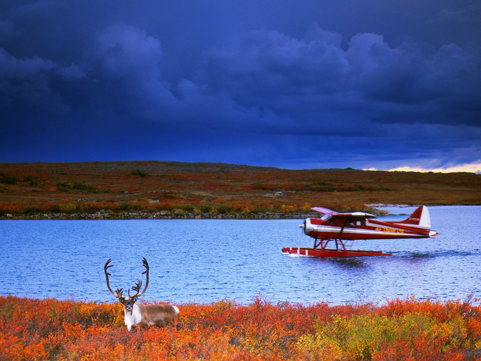 CANVAS Caribou and Float Plane Art print POSTER