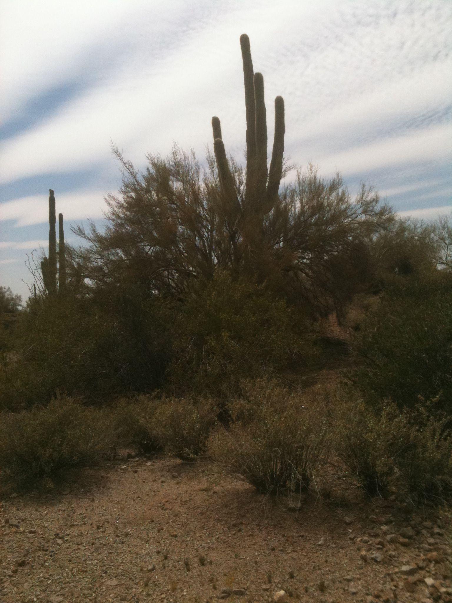 Arizona desert.