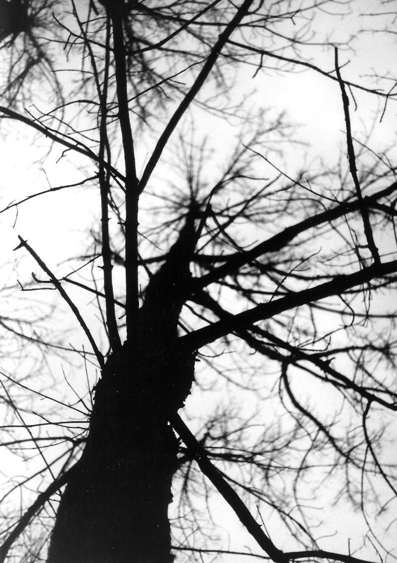 Winter's Spine