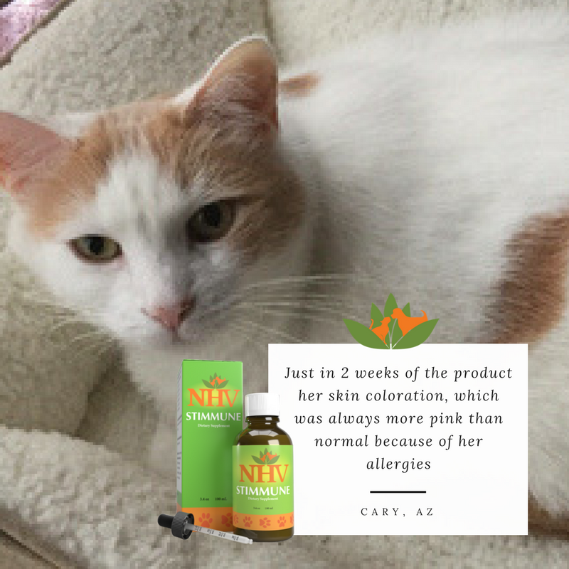 Stimmune for cats (With images) Cat allergies, Cat