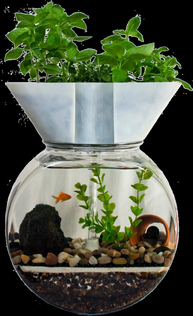About the goldfish garden aquaponic aquarium kit for Aquaponics fish tank kit