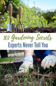 "101 Gardening Secrets Experts Never Tell You — It's almost time to plant your garden! In these uncertain times, planting your ""Victory Garden"