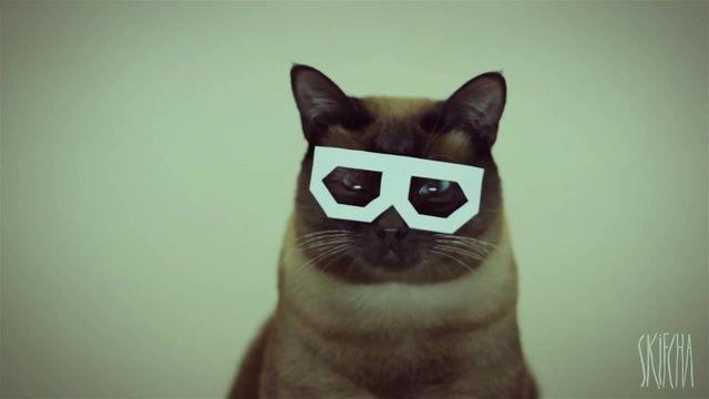 valerian+cat=catstep