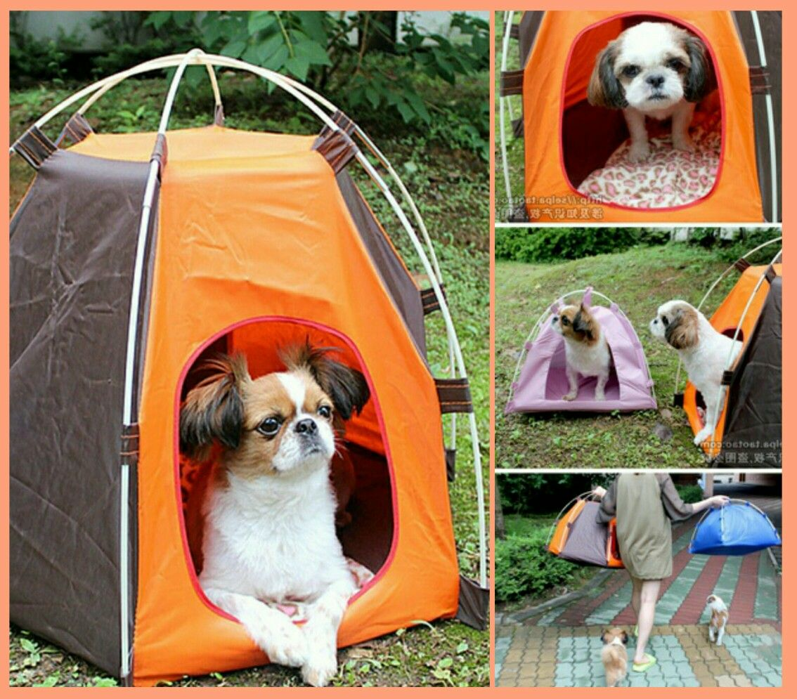 Dog · PUPPY PUP/POP TENT! & PUPPY PUP/POP TENT! The perfect #miniature size u0026 too #cute to ...