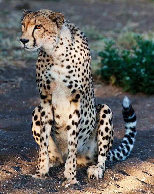 Wildlife Pictures Online