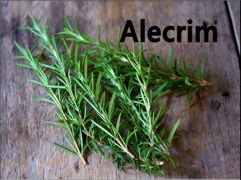 Santa Receita | Conheça o poder do alecrim e aprenda receitas naturais - 06 de Abril de 2015 - YouTube