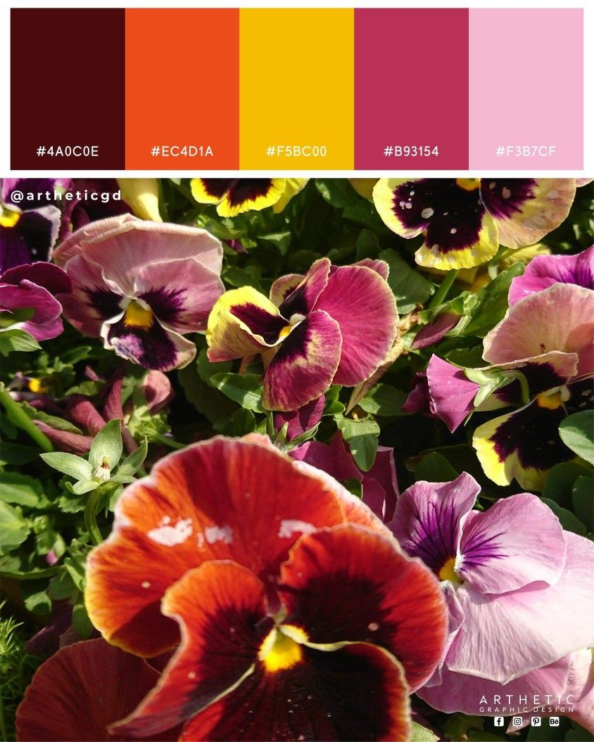Lovely Pansy Flowers Color Palette This Beautiful Flowers Shot Taken At 69th Pakistan Annual Flower Show Colorful In 2020 Annual Flowers Color Palette Flower Show