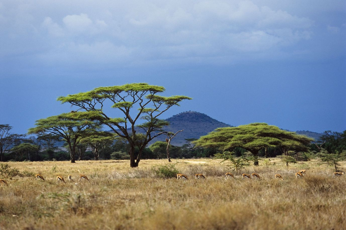 savannah.jpg (1377×918)