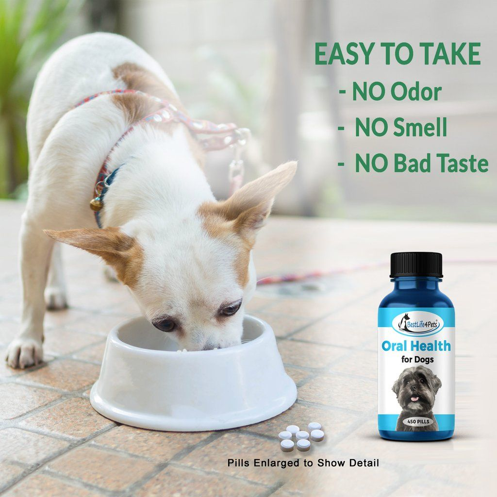 Oral health for dogs helps gingivitis bad breath and