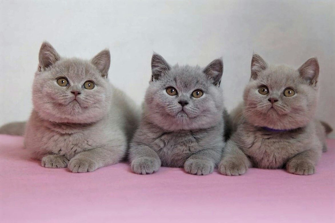 Idee Von Nicole Auf Katzen Katzen
