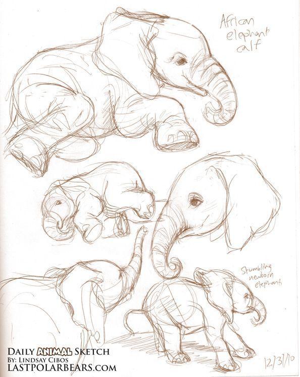 Studien an einem asiatischen Elefantenkalb und einem Baby-Erdmännchen. Beschreibung von lastpolar #tattoodrawings