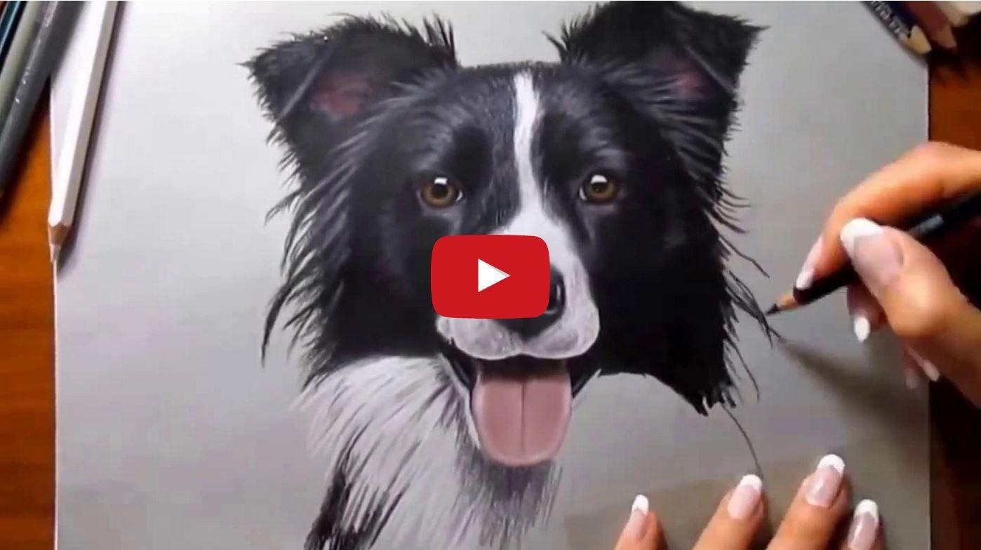 Drawing A Border Collie Border Collie Art Collie Dog Animal